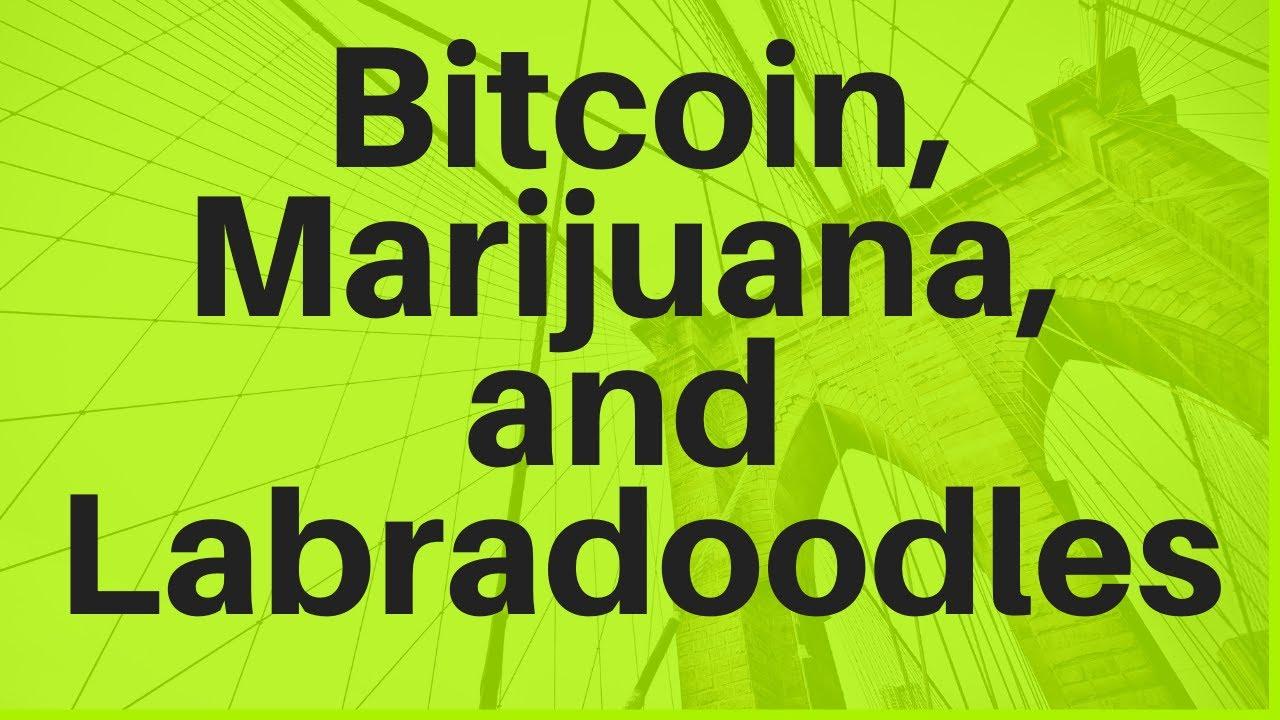 Bitcoin, Marijuana, and Labradoodles - YouTube