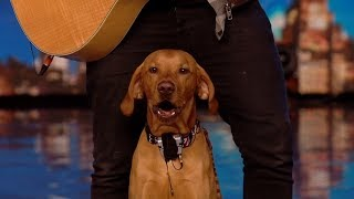 Britain's Got Talent Unseen 2020 Aaron & Buddy the Singing Dog Full Audition S14E01