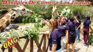 8- Dándole de comer a las Jirafas - Por primera vez en Guatemala Parte 8