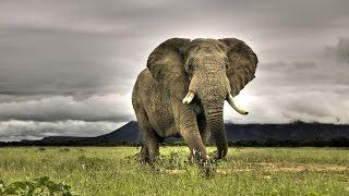 Слоны Уфа, зоопарк в МЕГЕ