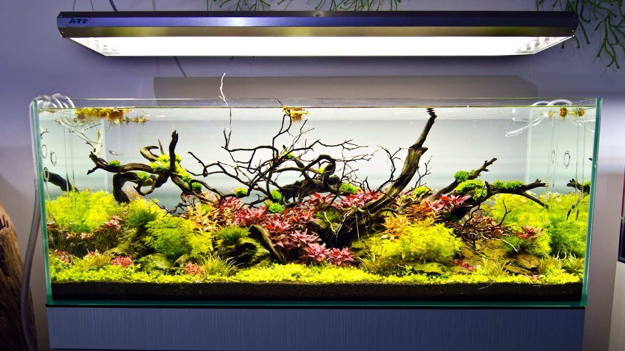 A Visit to Aquarium Design Group - YouTube