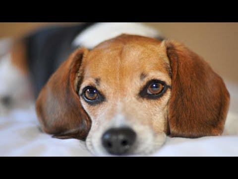 Вопрос: Почему собаки так сильно воняют?