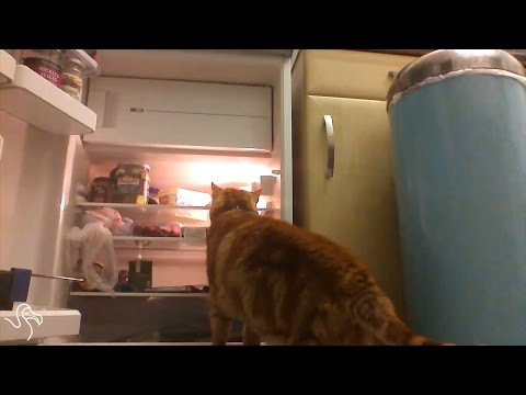 Cats Opening Fridges
