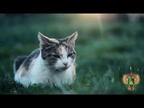 О диагностике кожных заболеваний кошек
