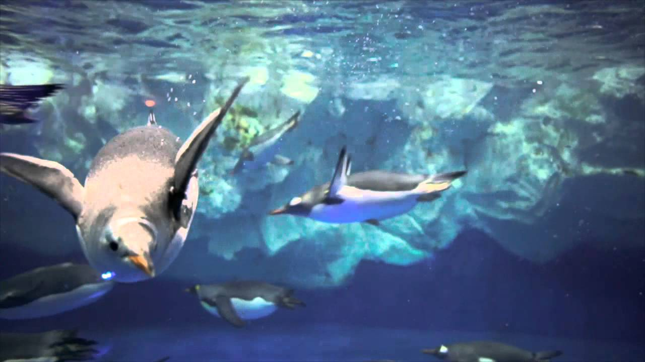 Kelly Tarltons SEA LIFE Aquarium - YouTube