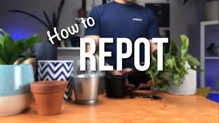 How to Repot A Plant | Beginner's Guide to Containers & Repotting