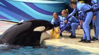 Happy 14th Birthday, Nakai! (Seen during One Ocean at SeaWorld San Diego)