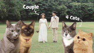 고양이 4마리 키우는 부부의 24시간 관찰!  (집사부부의 하루-평일편)