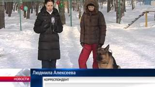 Площадка для собак в Вологде