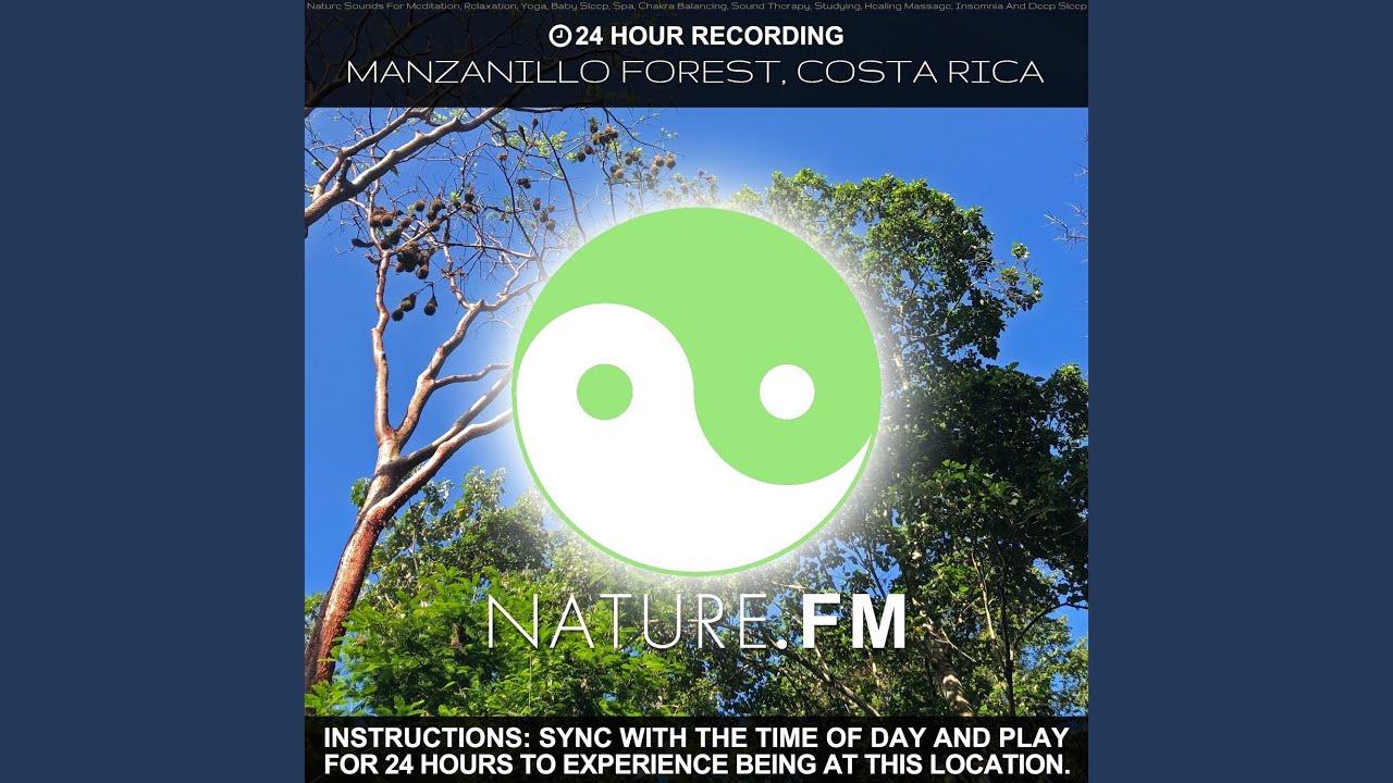 2 am (Manzanillo Forest, Costa Rica)