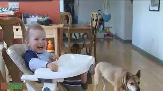 Baby and Dog are Best Friends Funny Fails Baby Video.Funny Babies Compilation 2019