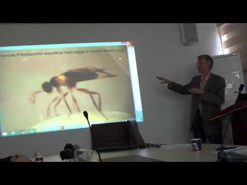 Victor Fursov (pt-4): Trichogrammatidae (Hymenoptera) - Egg-Parasitoids of Pests, Turkiye