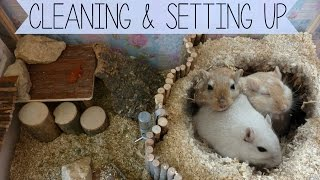 Cleaning & Setting up the Gerbils Cage