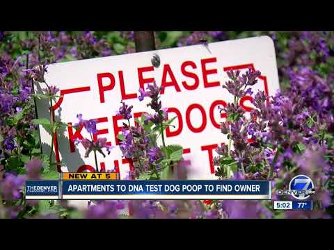 Apartments to DNA test dog poop to find owner