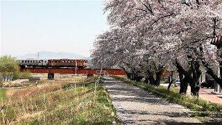 フラワー長井線春の風景【山形鉄道】