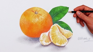 How To Draw An Orange  -  Easy And Simple Steps |