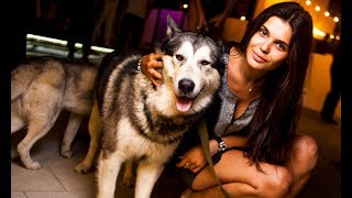 Хаски фото с девушкой / фотосессия с собаками