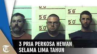 3 Pria Didakwa 41 Tahun Penjara setelah Perkosa Sapi, Anjing, Kuda hingga Kambing selama 5 Tahun