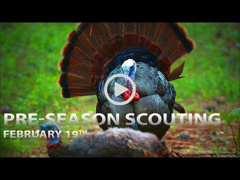 Pre-Season Scouting Tips, Trail Cam Strategies | Spring Thunder