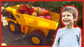 Toy Dump Trucks and Loaders Picking Organic Strawberries!