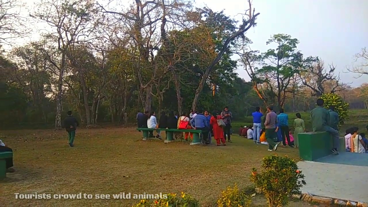 Tourists crowd to see wild animals | Jaldapara National Park | 2k19
