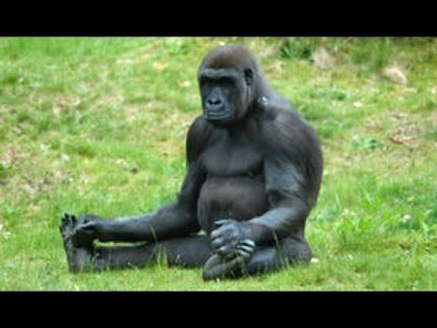 Приколы с обезьянами-))))), Видео, Смотреть онлайн