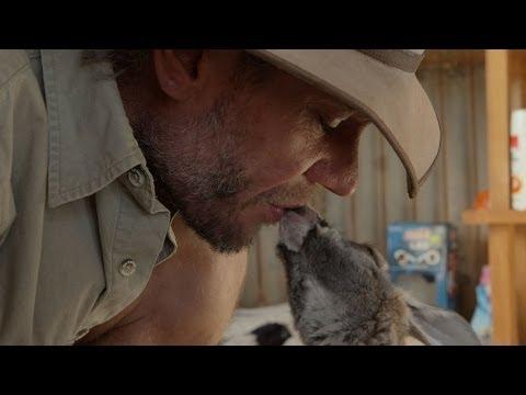 Brolga bonds with baby kangaroos - Kangaroo Dundee: Episode 1 Preview - BBC Two