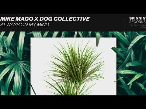 Mike Mago x The Dog Collective - Always On My Mind
