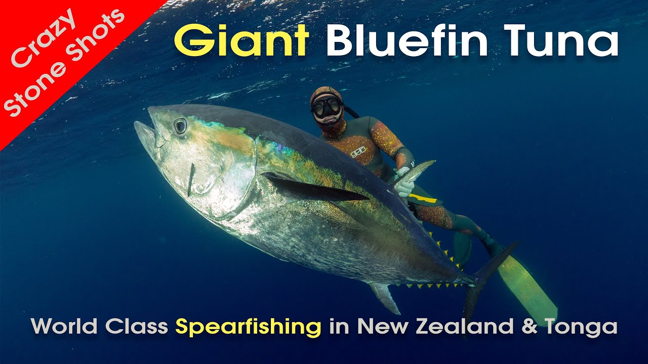 Spearfishing new zealand bluefin tuna tonga with mjk for Tuna fishing video