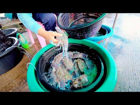 สะพานปูชัก 📌 แหล่งซื้อปูม้า และอาหารทะเลถูกถูกในชะอำ#sadoodta