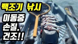 백조기 손질 / 백조기낚시후 이동할때 손질해서 말리면 맛있는 반찬거리 됩니다/ Kayak Fishing Korea