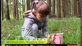 Москва-24, сюжет с грибами.