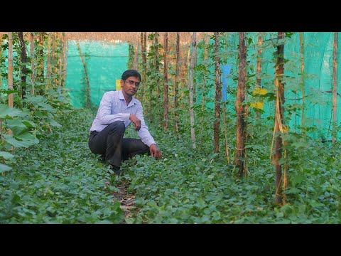 How can a small farmer earn Rs 15 lakh from multilayer farming?
