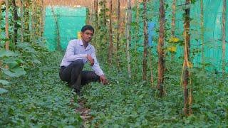 कैसे एक छोटे से किसान बहुपरत खेती से 15 लाख रुपए कमा सकते हैं?