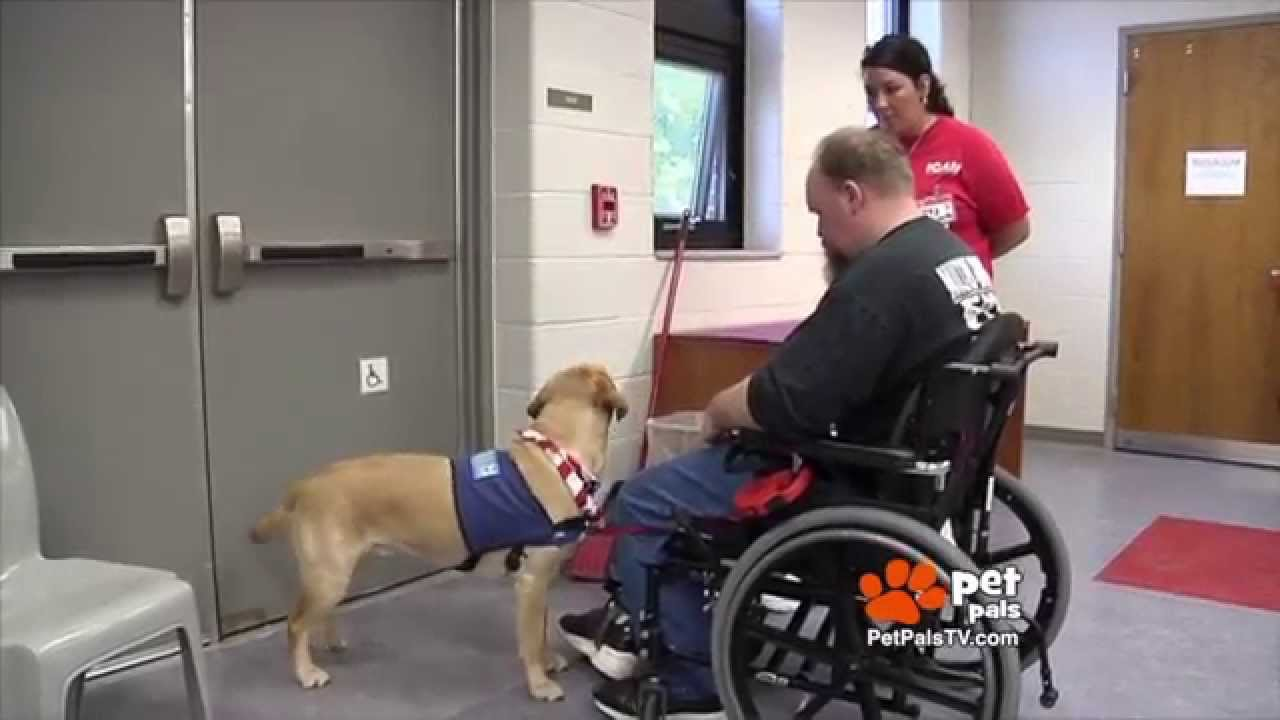 Can you spot a fake service dog youtube 1betcityfo Images