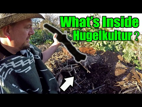 I Cut My 8 Year Old Hugelkultur In Half! You Won't Believe What I Found Inside!!