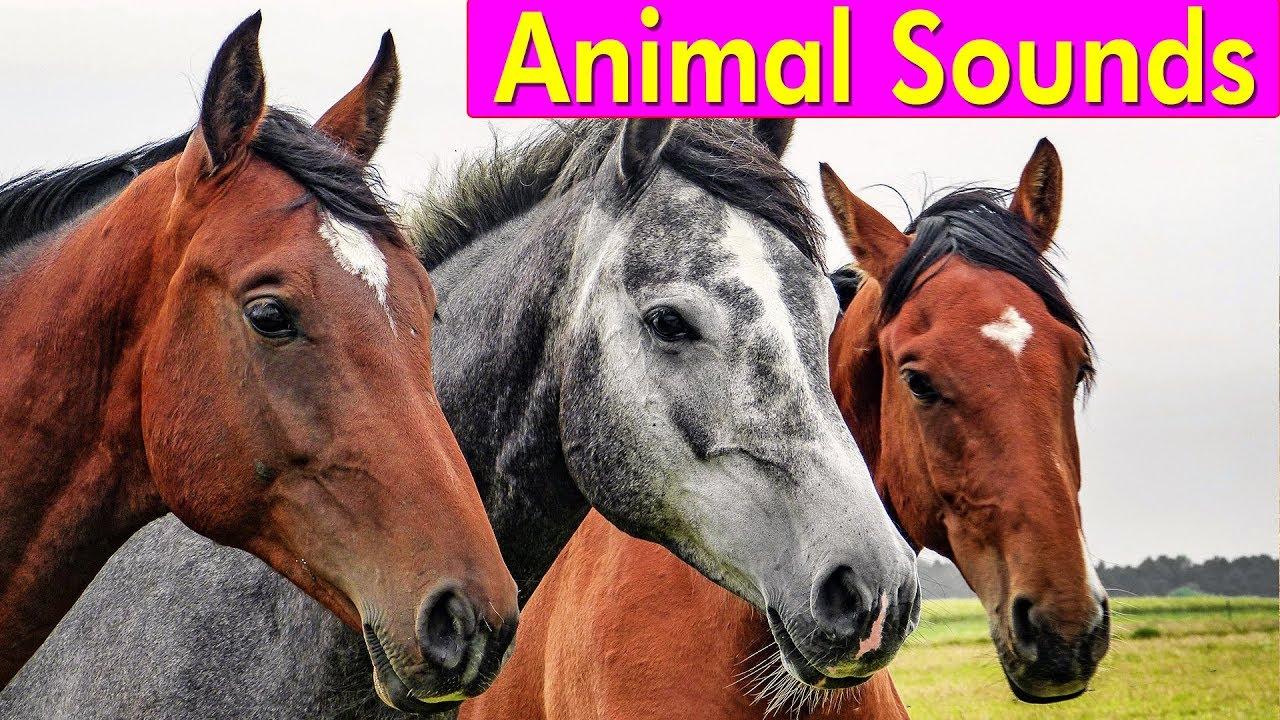 20 Amazing Animals - Animal Sounds for Children