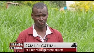 Fodder Farming for Profit efficiency of dairy farmers in Kenya – Part 1