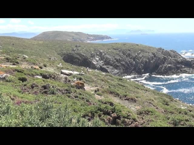 Visita a la Isla de Ons - Parque Nacional Islas Atlánticas. Naturaleza en la costa gallega