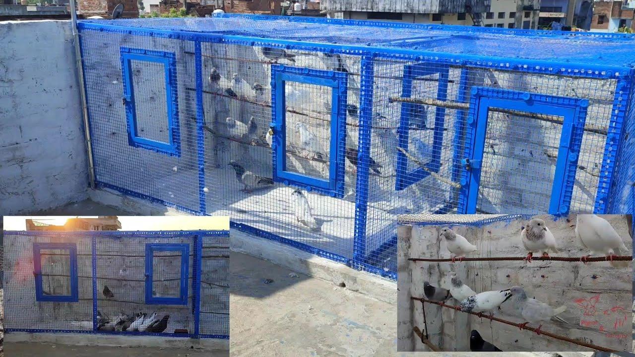 New jaal mai kabutar ka grih🏠 praweh ho hi gaya aaj😉 || new pigeon cage is ready | kasni kabutar