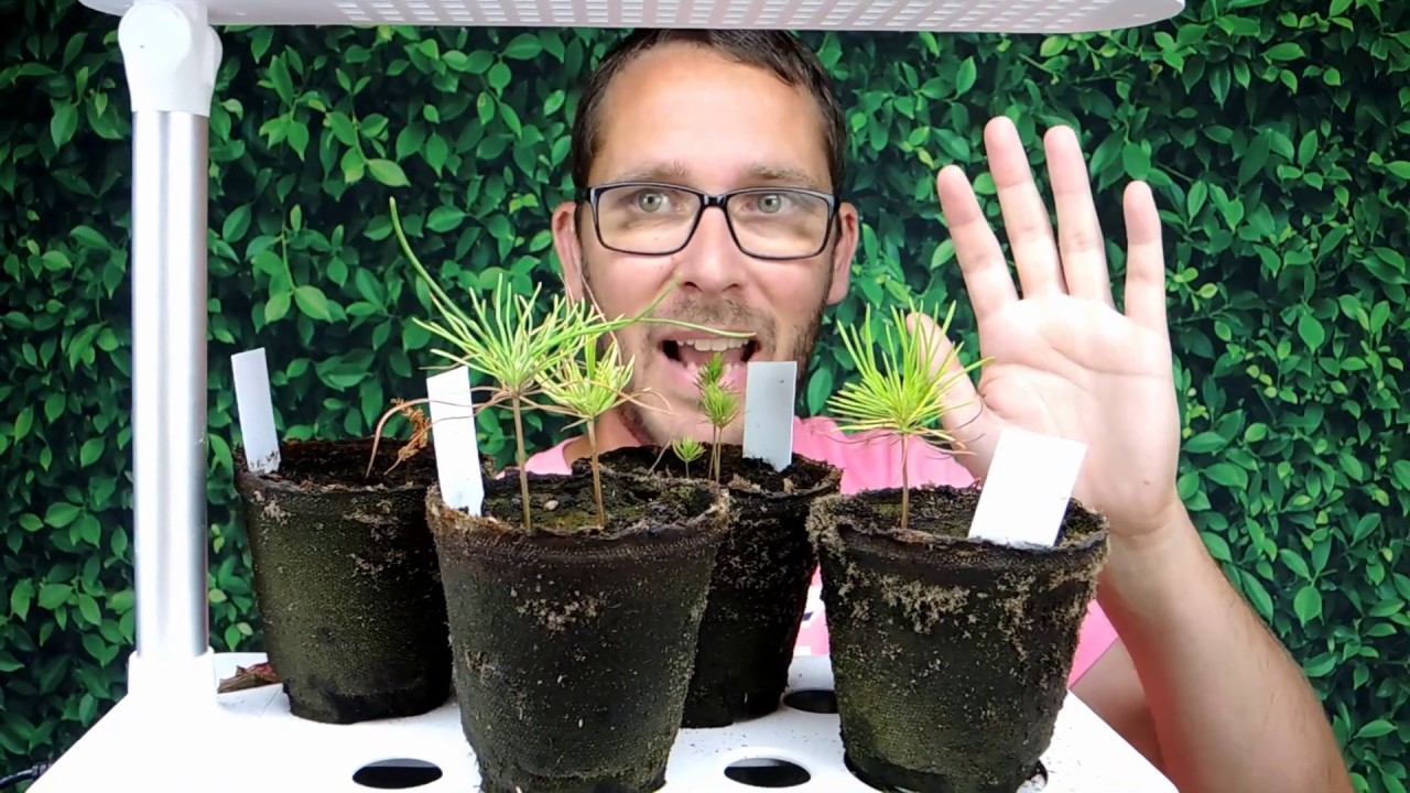 Nature S Blossom Bonsai Kit Update Before They Go Outside Youtube