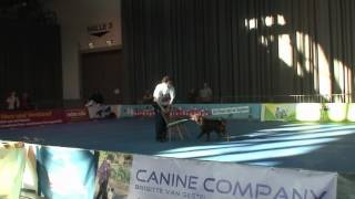 1. International Dog Dance Tournament, Freiburg In Breisgau, Germany, Nov. 2011