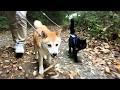 犬と猫。藤の下でお散歩 cat and dog walking together の動画、YouTube動画。