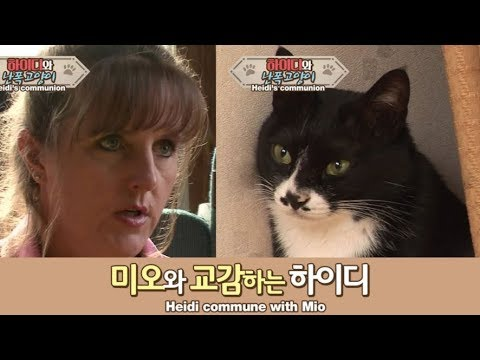 난폭해진 고양이 미오..하이디와 교감 후 변화가?