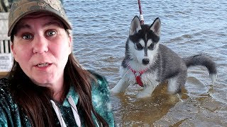 husky-puppy-kira-first-time-at-the-lake