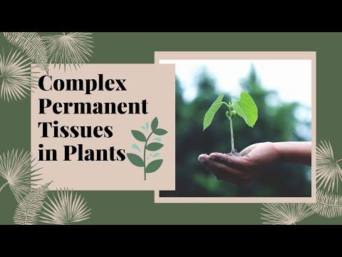 Complex Permanent Tissues | Xylem & Phloem | Plant Tissues | Biology