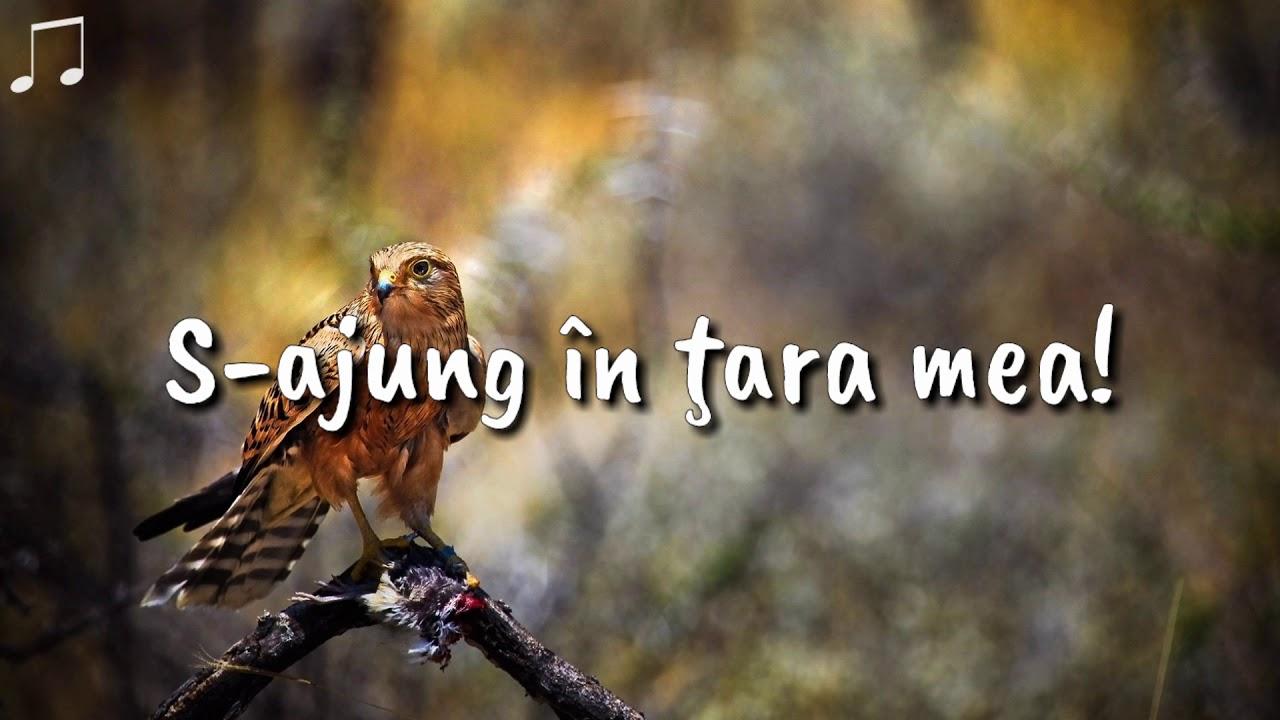 Download Marius Gorcea - Lacrimile de durere