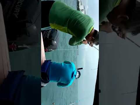 PONGA Fishing- Coral Trout / Ang Gao Caught @ Southern Islan