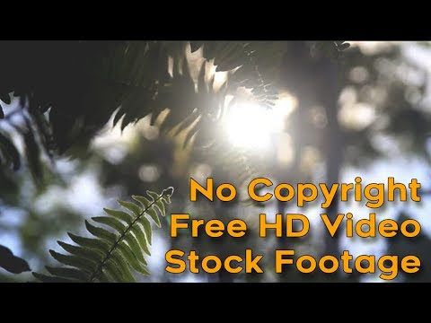 No Copyright | Free HD Video | Stock Footage -  Neutral Picture Style | Nature | Grass | Flowers