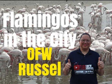 Dubai Flamingos – Ras Al Khor Wildlife Sanctuary 2019
